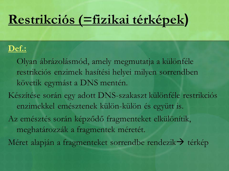 Restrikciós (=fizikai térképek ) Def.: Olyan ábrázolásmód, amely megmutatja a különféle restrikciós enzimek hasítési helyei milyen sorrendben követik egymást a DNS mentén.