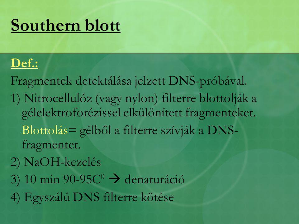 Southern blott Def.: Fragmentek detektálása jelzett DNS-próbával.