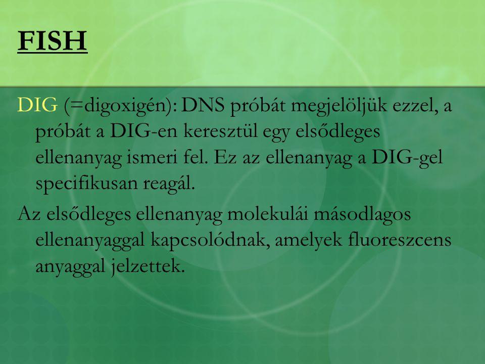 FISH DIG (=digoxigén): DNS próbát megjelöljük ezzel, a próbát a DIG-en keresztül egy elsődleges ellenanyag ismeri fel.