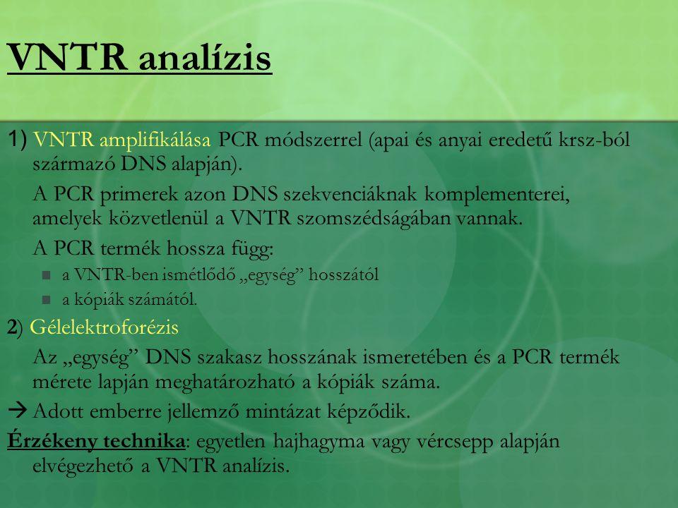 1) VNTR amplifikálása PCR módszerrel (apai és anyai eredetű krsz-ból származó DNS alapján).