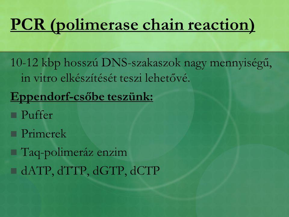 PCR (polimerase chain reaction) 10-12 kbp hosszú DNS-szakaszok nagy mennyiségű, in vitro elkészítését teszi lehetővé.