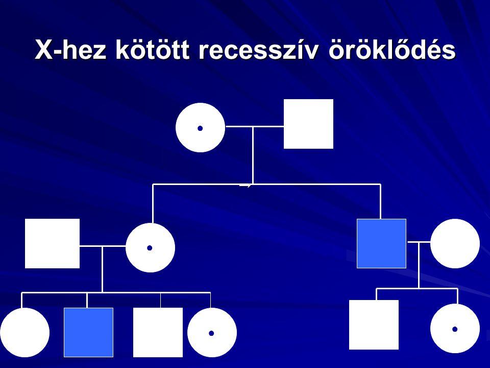 X-hez kötött recesszív öröklődés ○ ● ● ● → ●
