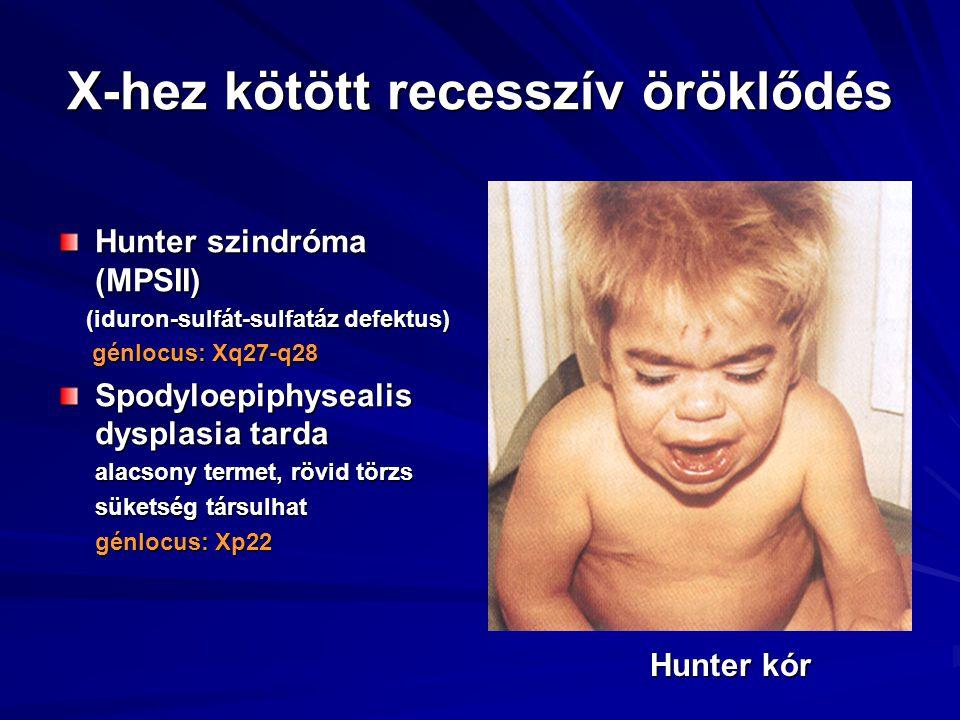 X-hez kötött recesszív öröklődés Hunter szindróma (MPSII) (iduron-sulfát-sulfatáz defektus) (iduron-sulfát-sulfatáz defektus) génlocus: Xq27-q28 génlo