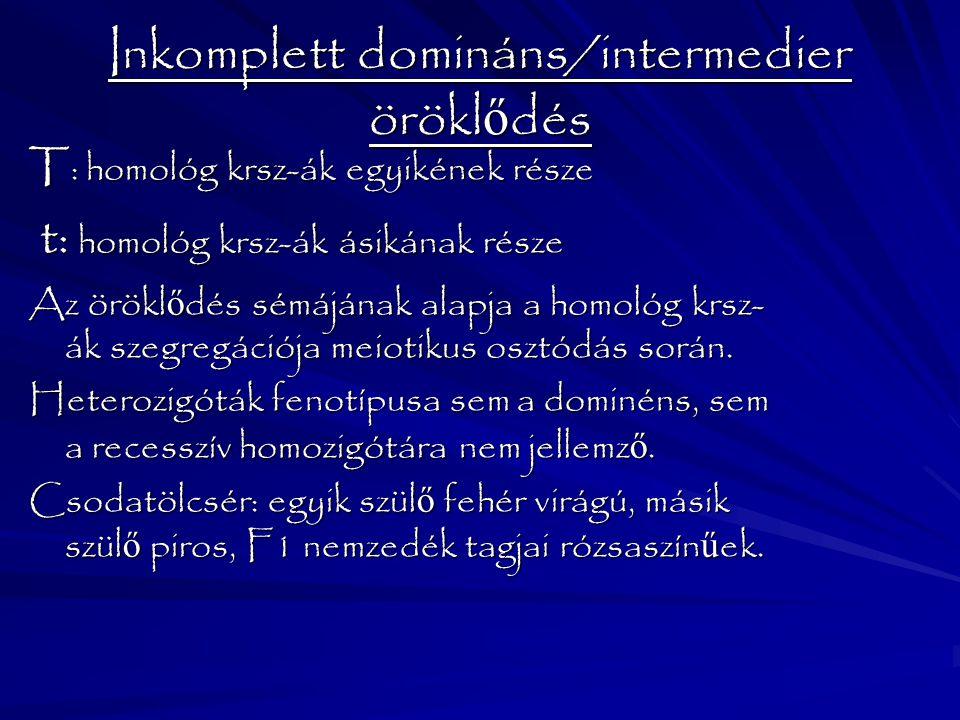 Inkomplett domináns/intermedier örökl ő dés T : homológ krsz-ák egyikének része t: homológ krsz-ák ásikának része t: homológ krsz-ák ásikának része Az