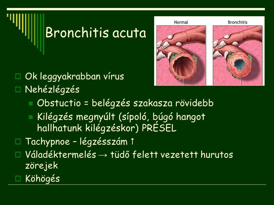 Bronchitis acuta  Ok leggyakrabban vírus  Nehézlégzés Obstuctio = belégzés szakasza rövidebb Kilégzés megnyúlt (sípoló, búgó hangot hallhatunk kilég