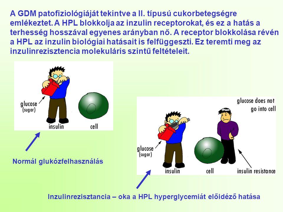 A GDM patofiziológiáját tekintve a II. típusú cukorbetegségre emlékeztet. A HPL blokkolja az inzulin receptorokat, és ez a hatás a terhesség hosszával