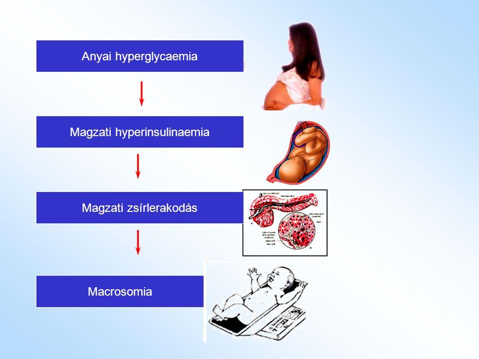 Anyai hyperglycaemia Magzati hyperinsulinaemia Magzati zsírlerakodás Macrosomia