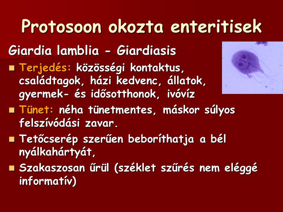 Protosoon okozta enteritisek Giardia lamblia - Giardiasis Terjedés: közösségi kontaktus, családtagok, házi kedvenc, állatok, gyermek- és idősotthonok,