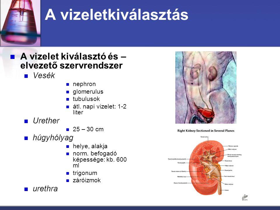 A vizeletkiválasztás A vizelet kiválasztó és – elvezető szervrendszer Vesék nephron glomerulus tubulusok átl. napi vizelet: 1-2 liter Urether 25 – 30