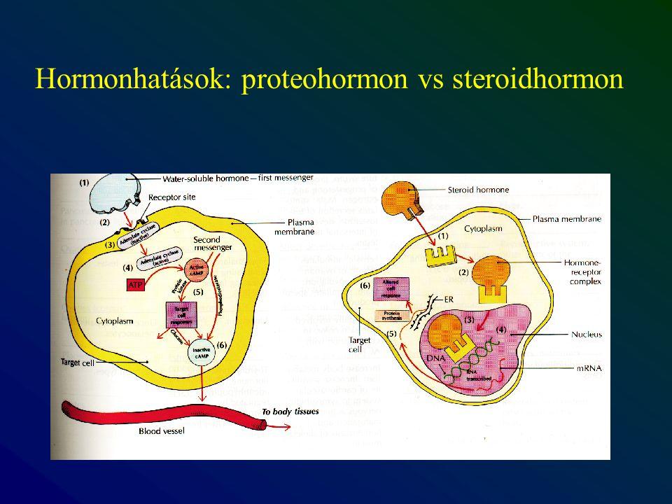 Hormonhatások: proteohormon vs steroidhormon