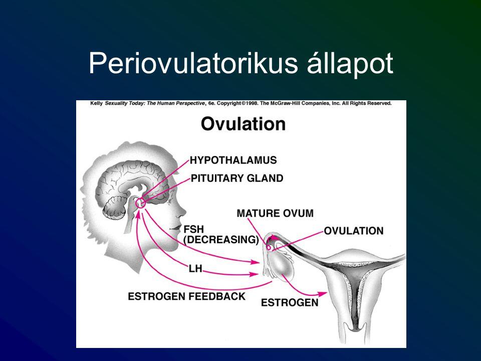 Periovulatorikus állapot
