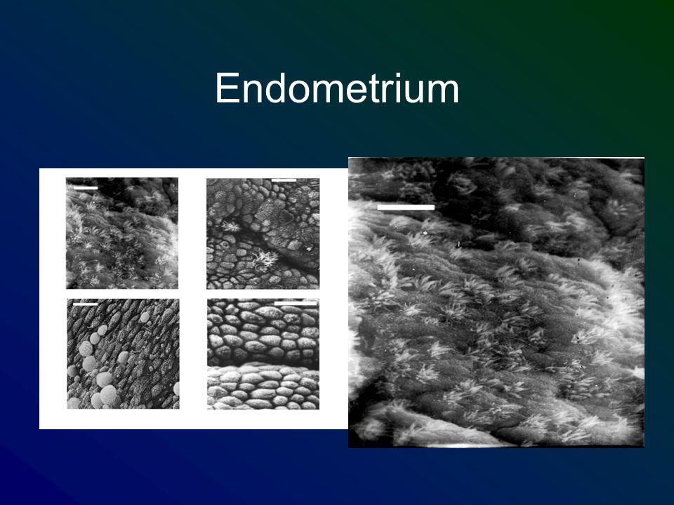 Endometrium
