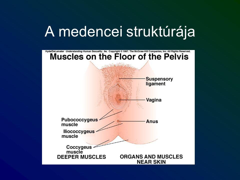 A medencei struktúrája