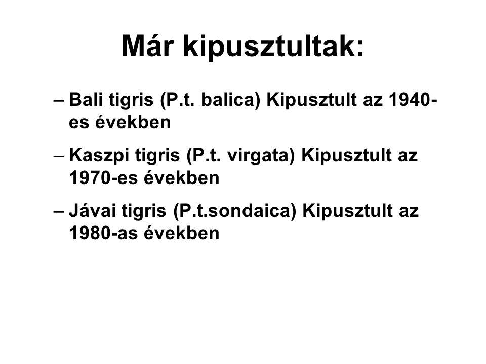 Már kipusztultak: –Bali tigris (P.t. balica) Kipusztult az 1940- es években –Kaszpi tigris (P.t. virgata) Kipusztult az 1970-es években –Jávai tigris