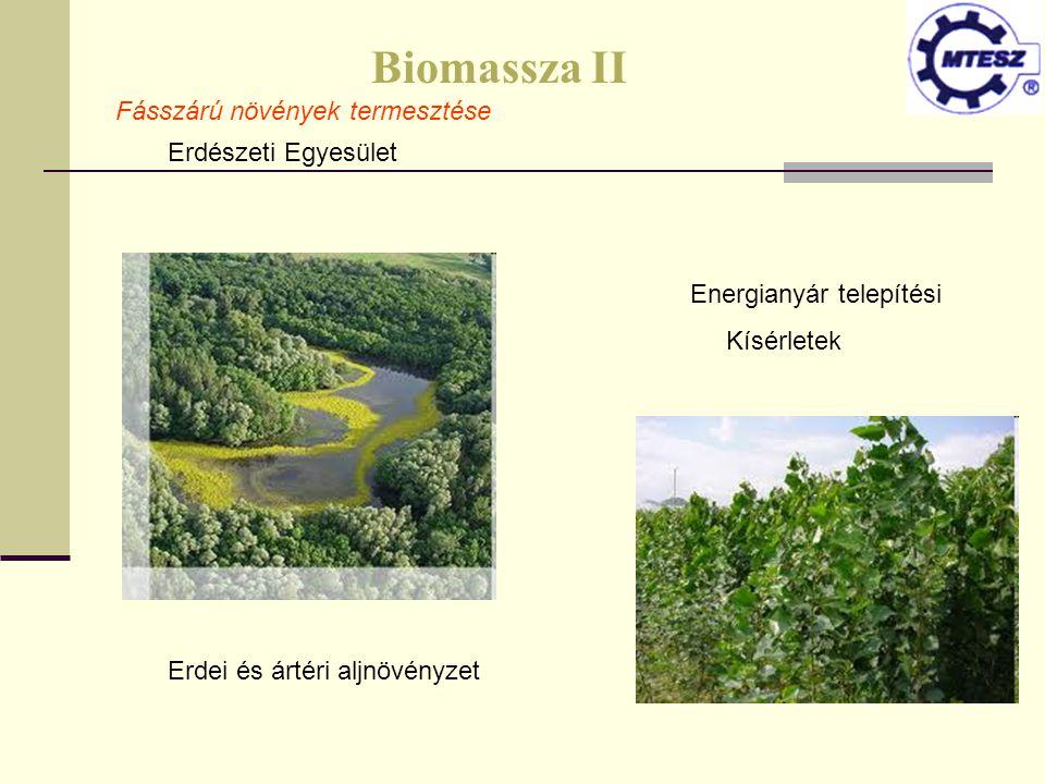 Biomassza II Fásszárú növények termesztése Erdészeti Egyesület Energianyár telepítési Kísérletek Erdei és ártéri aljnövényzet