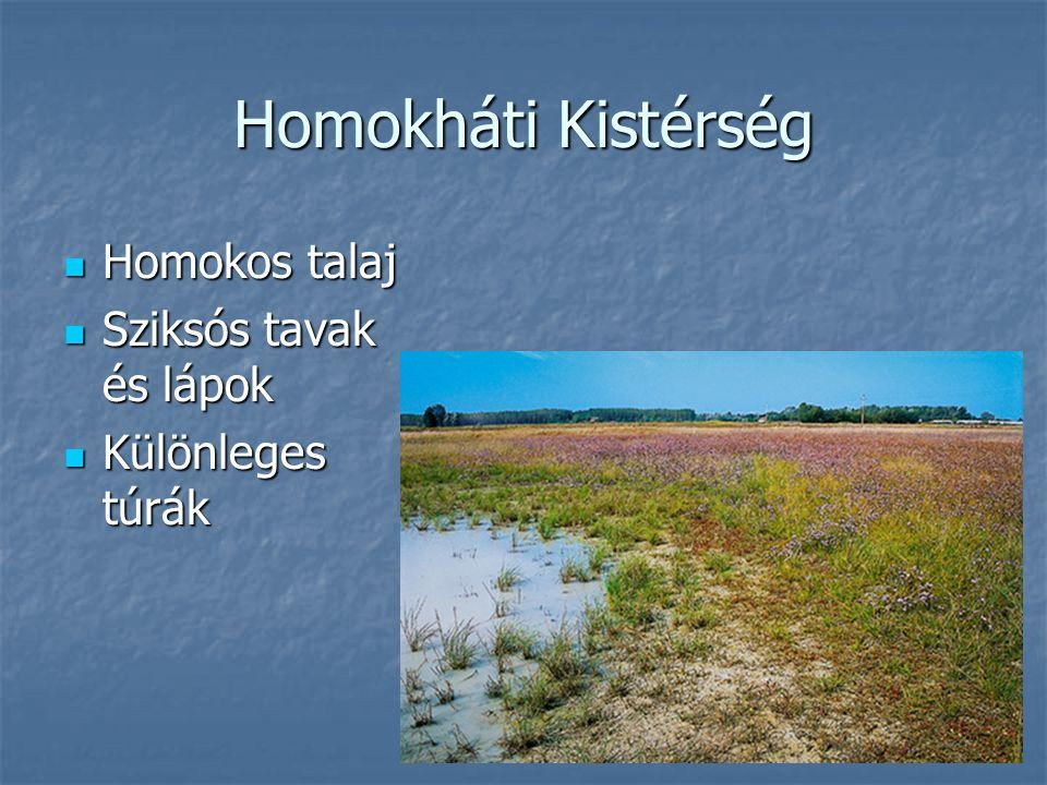 Homokháti Kistérség Homokos talaj Homokos talaj Sziksós tavak és lápok Sziksós tavak és lápok Különleges túrák Különleges túrák