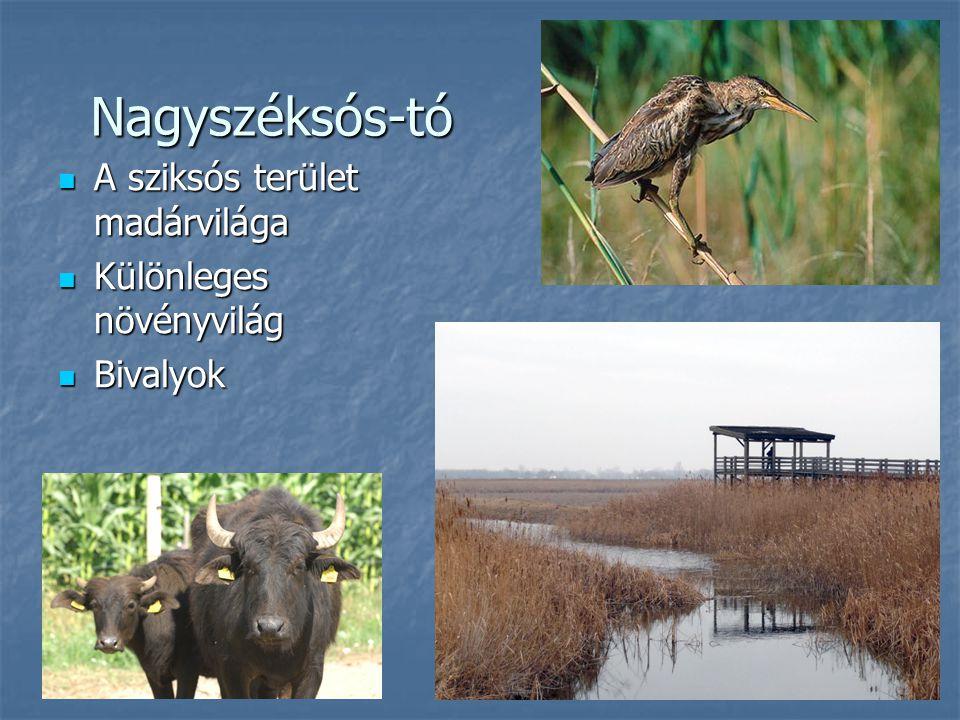 Nagyszéksós-tó A sziksós terület madárvilága A sziksós terület madárvilága Különleges növényvilág Különleges növényvilág Bivalyok Bivalyok