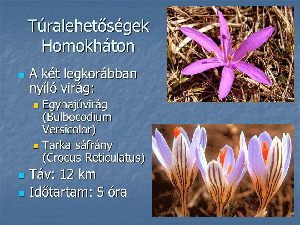 Túralehetőségek Homokháton A két legkorábban nyíló virág: A két legkorábban nyíló virág: Egyhajúvirág (Bulbocodium Versicolor) Egyhajúvirág (Bulbocodi