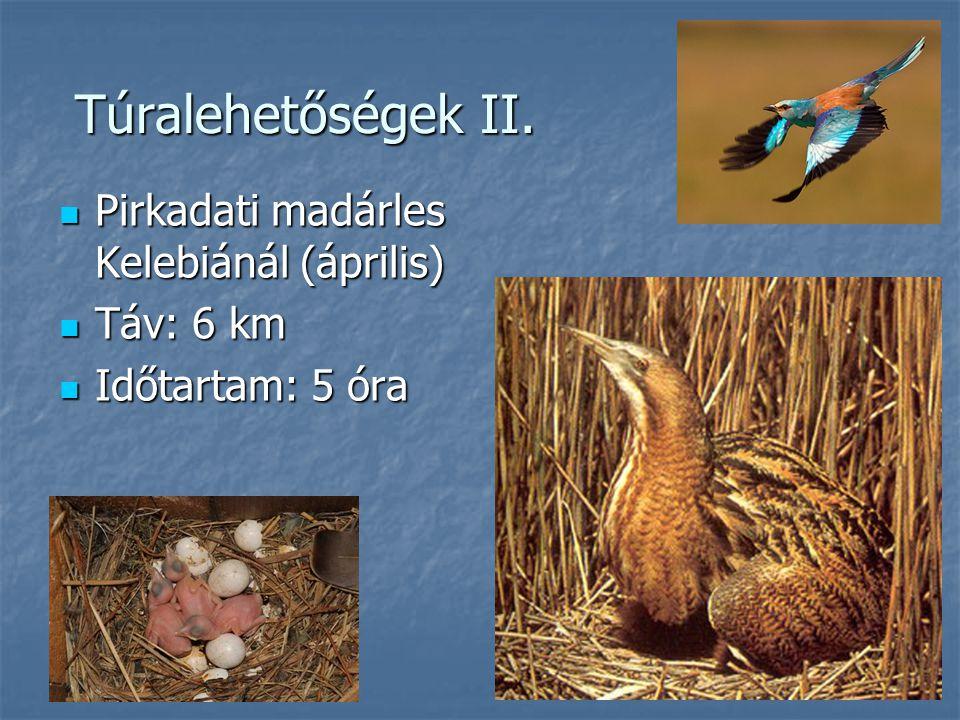 Túralehetőségek II. Pirkadati madárles Kelebiánál (április) Pirkadati madárles Kelebiánál (április) Táv: 6 km Táv: 6 km Időtartam: 5 óra Időtartam: 5