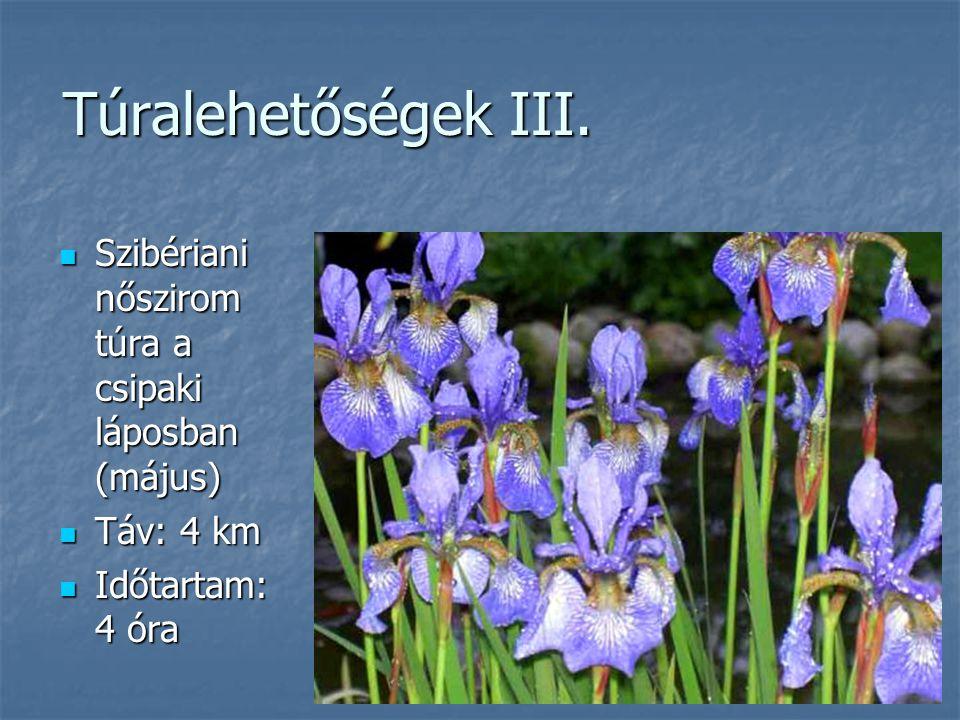 Túralehetőségek III. Szibériani nőszirom túra a csipaki láposban (május) Szibériani nőszirom túra a csipaki láposban (május) Táv: 4 km Táv: 4 km Időta