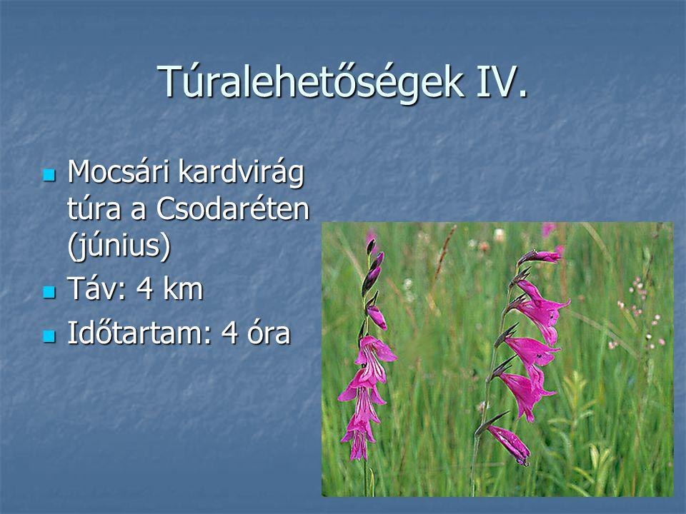 Túralehetőségek IV. Mocsári kardvirág túra a Csodaréten (június) Mocsári kardvirág túra a Csodaréten (június) Táv: 4 km Táv: 4 km Időtartam: 4 óra Idő