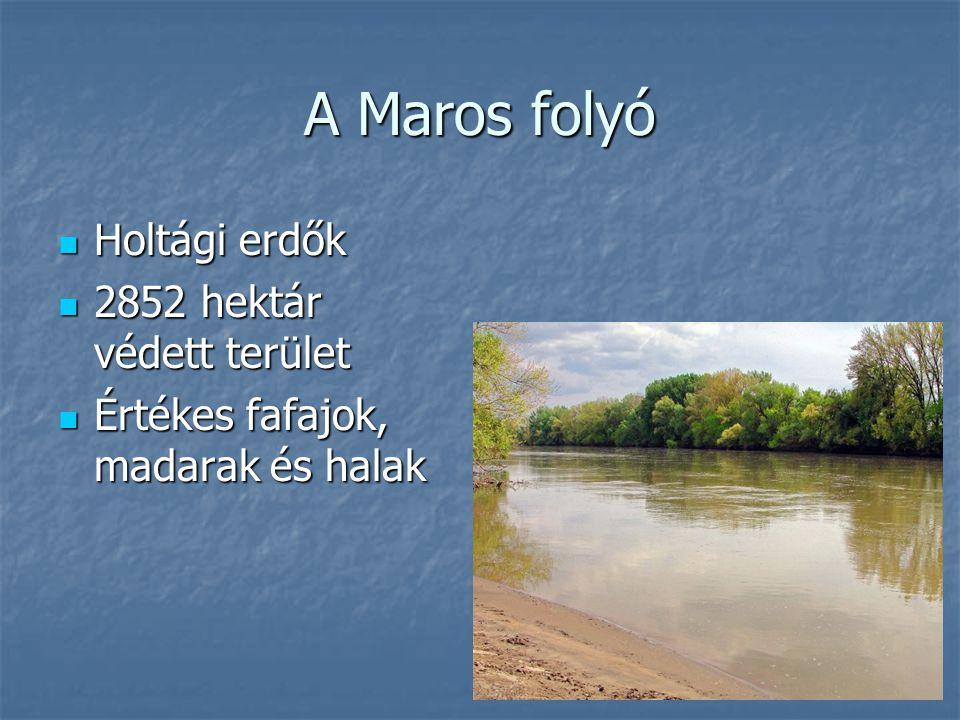 A Maros folyó Holtági erdők Holtági erdők 2852 hektár védett terület 2852 hektár védett terület Értékes fafajok, madarak és halak Értékes fafajok, mad