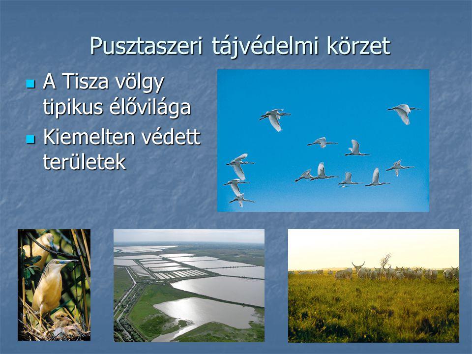Pusztaszeri tájvédelmi körzet A Tisza völgy tipikus élővilága A Tisza völgy tipikus élővilága Kiemelten védett területek Kiemelten védett területek