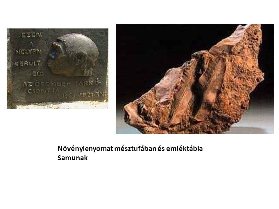Növénylenyomat mésztufában és emléktábla Samunak