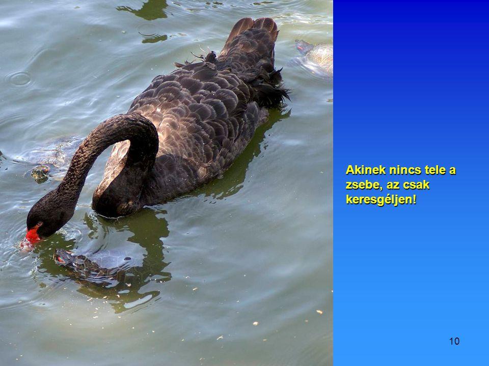 2009.07.11.Vidám állatok9 Teli zsebbel könnyen ugrálhatsz!
