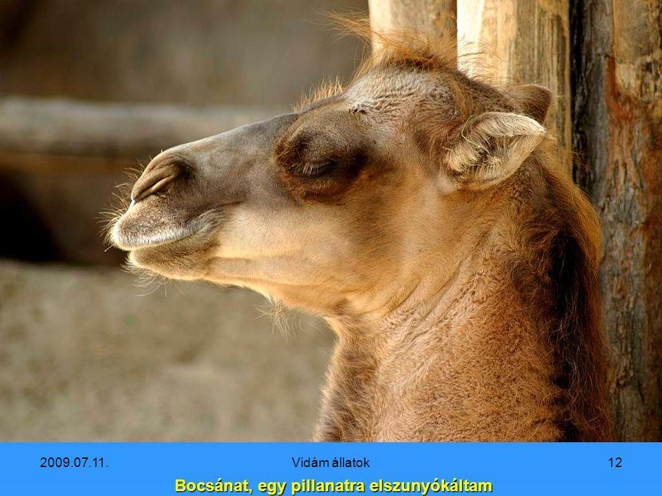 2009.07.11.Vidám állatok11 Ugye szép egy mosolygós teve-gyerek?