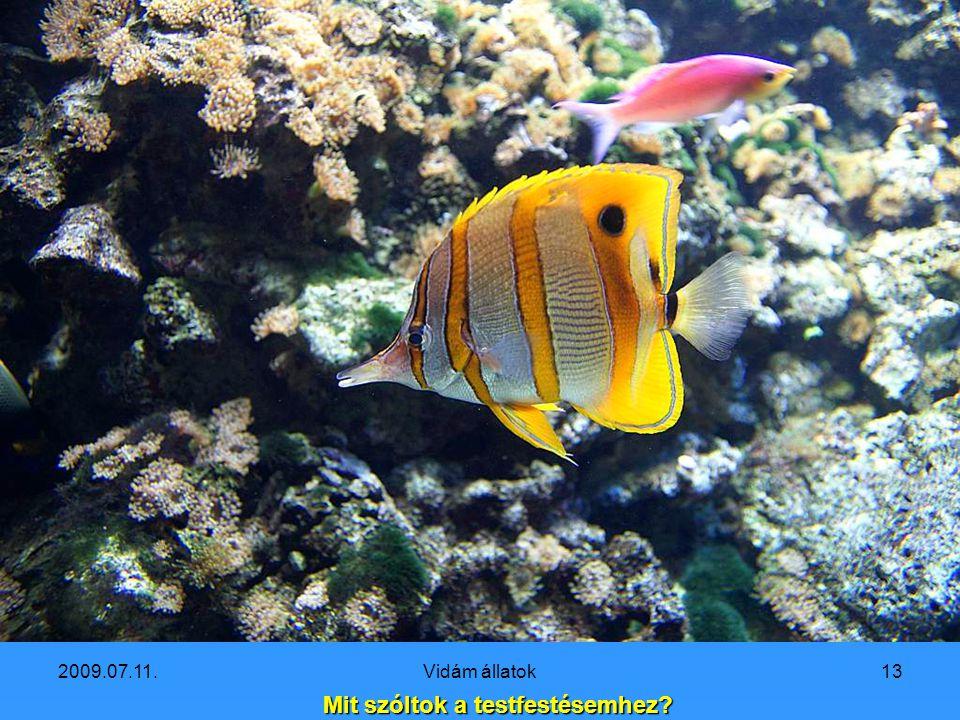 2009.07.11.Vidám állatok12 Bocsánat, egy pillanatra elszunyókáltam