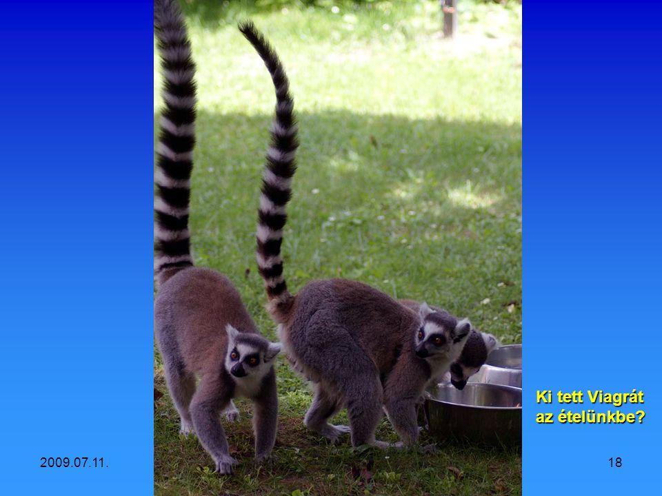 2009.07.11.Vidám állatok17 Haha, én ki tudom nyújtani és fagylaltot kérnék!
