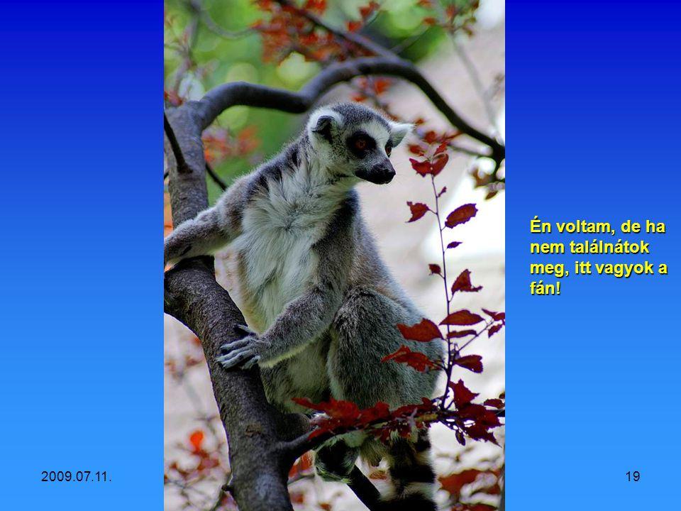 2009.07.11.Vidám állatok18 Ki tett Viagrát az ételünkbe?