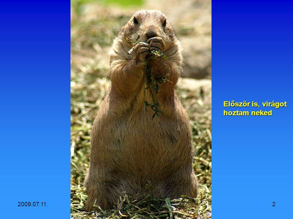 Vidám állatok Fényképezte: Szedő Iván 2009
