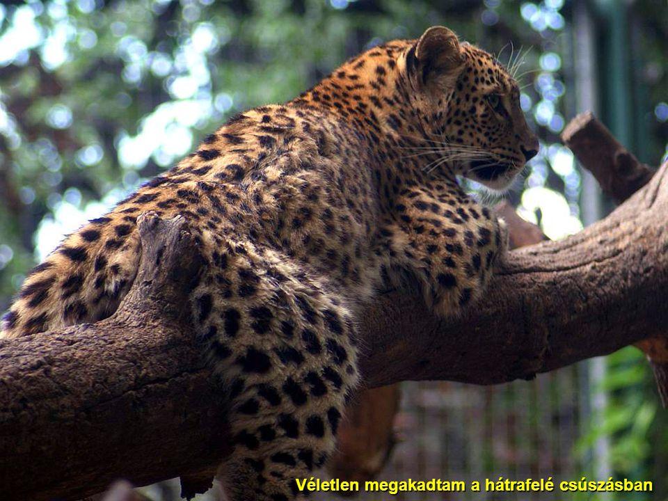 2009.07.11.Vidám állatok24 Én mindent láttam!
