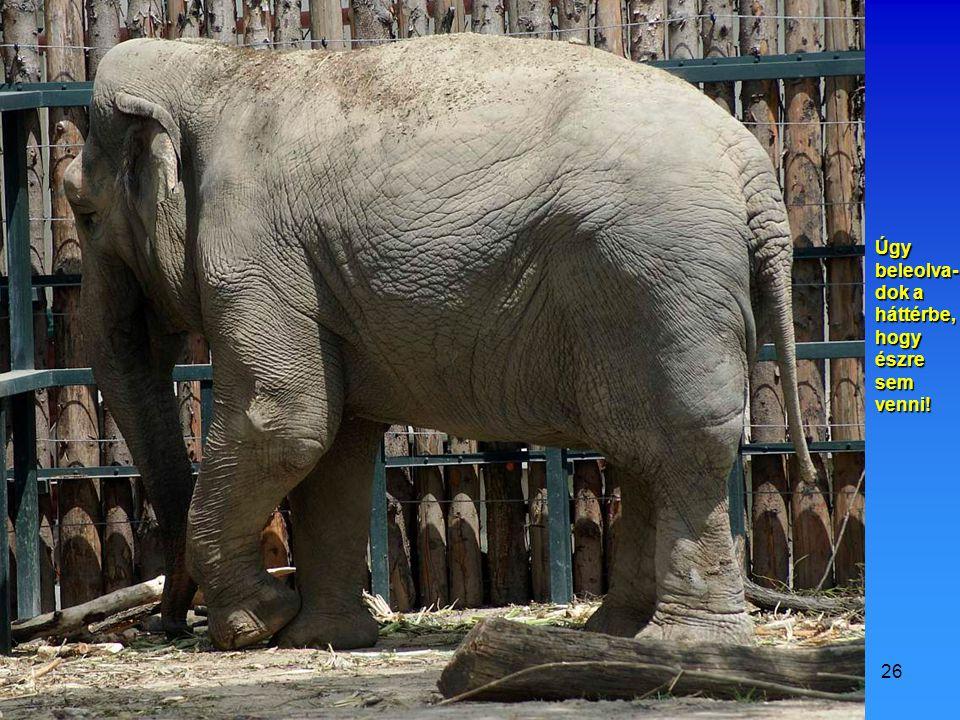 2009.07.11.Vidám állatok25 Véletlen megakadtam a hátrafelé csúszásban