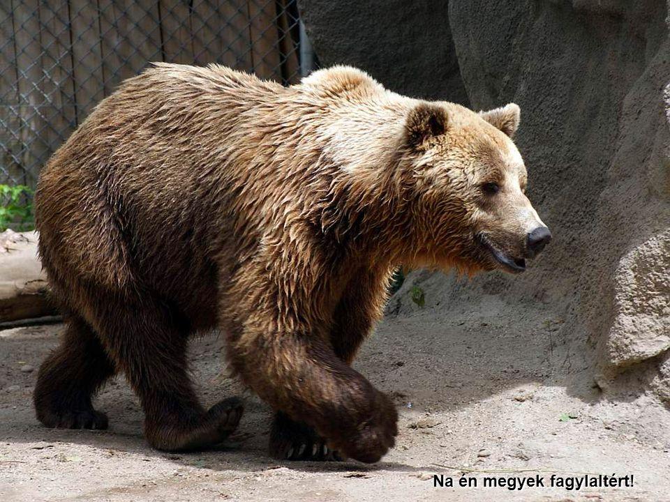 2009.07.11.Vidám állatok27 Én pedig, csak úgy erre jártam…