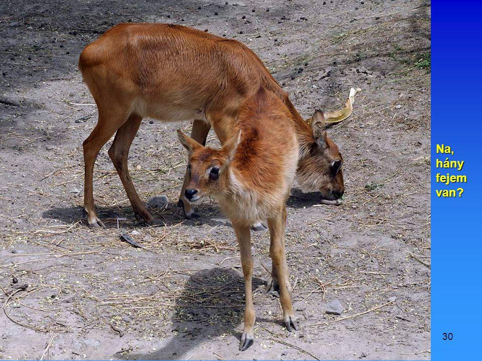 2009.07.11.Vidám állatok29 Én meg lefagylaltoztam a bundámat, ezért most fürdök