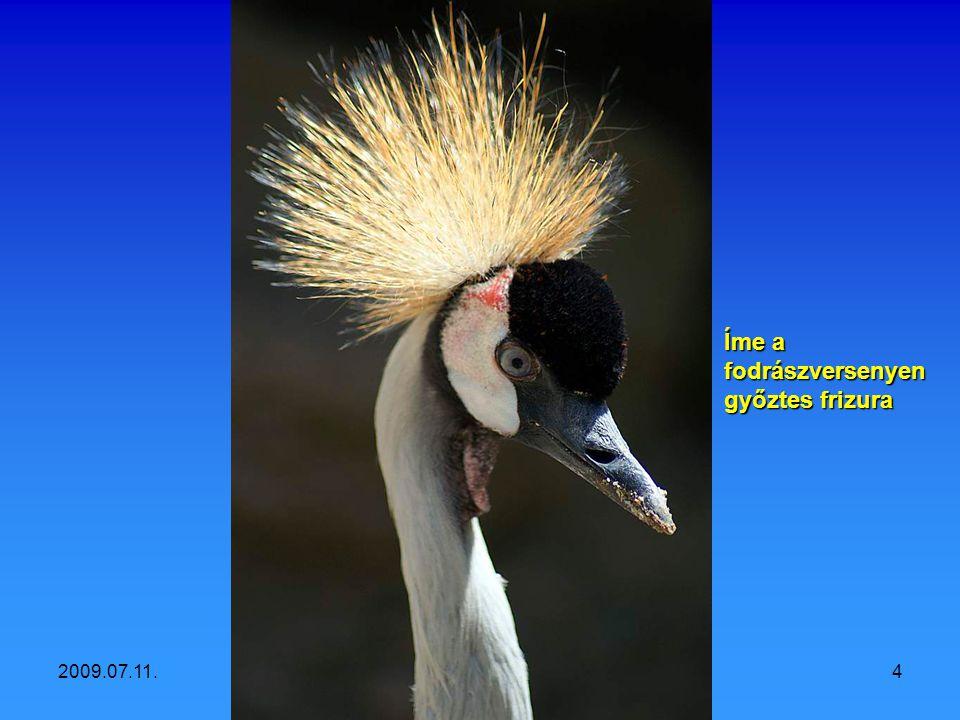 2009.07.11.Vidám állatok3 Hogy áll nekem ez a fejdísz?