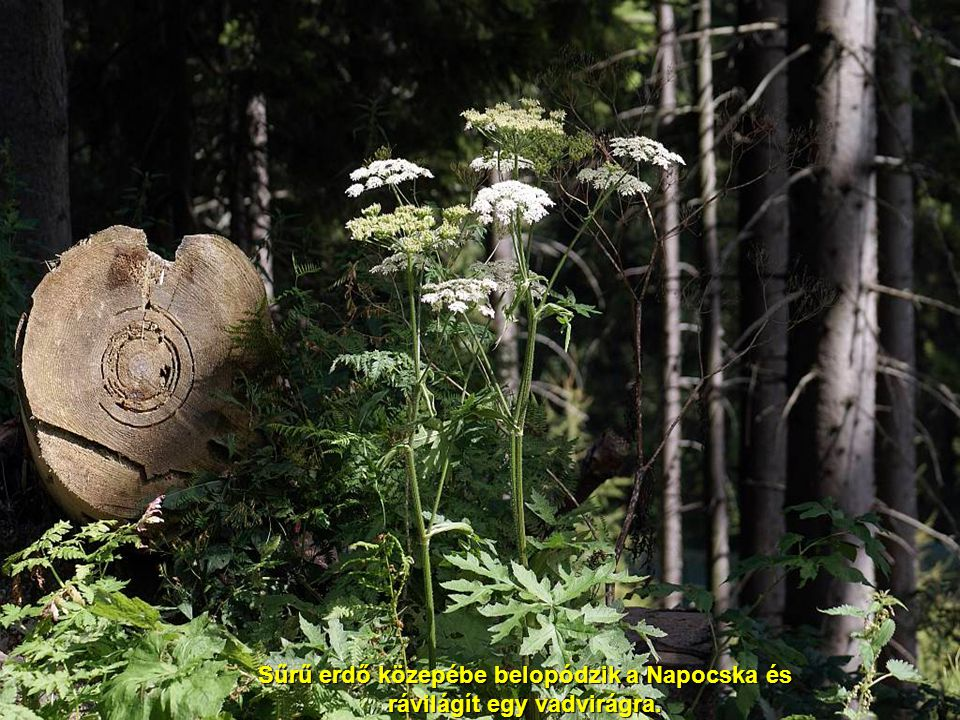 Mesél az erdő Feliratozta és fényképezte: Szedő IvánFeliratozta és fényképezte: Szedő Iván 20082008 Zene - Schumann: A boldog földműves.