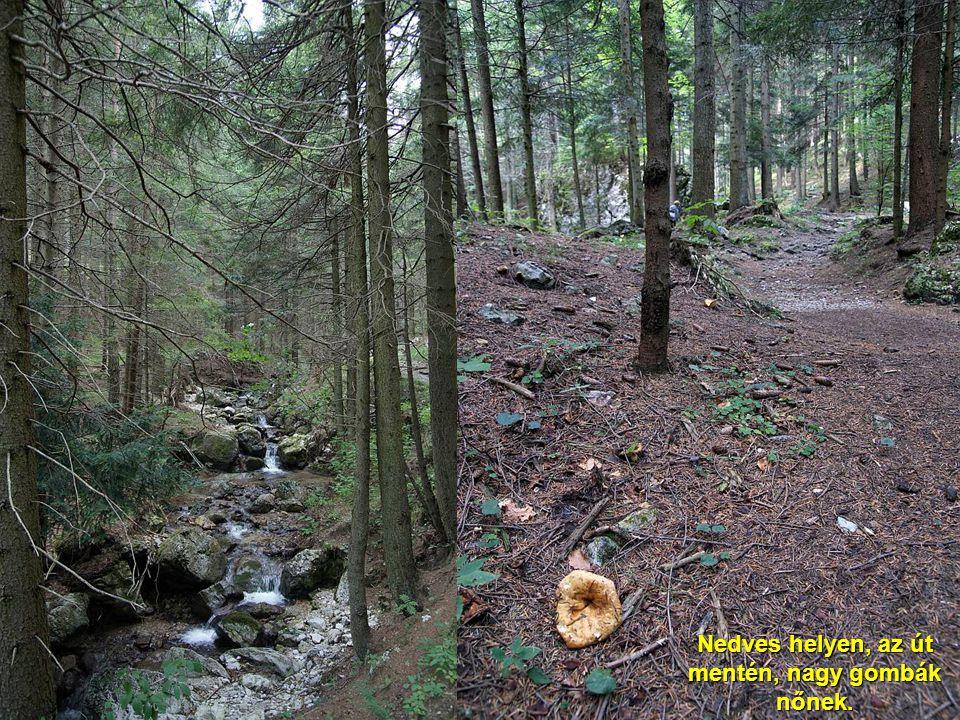 A sűrű, sötét erdő szélén még látszik a napfény. Odabenn gyors folyású patak csörgedezik.