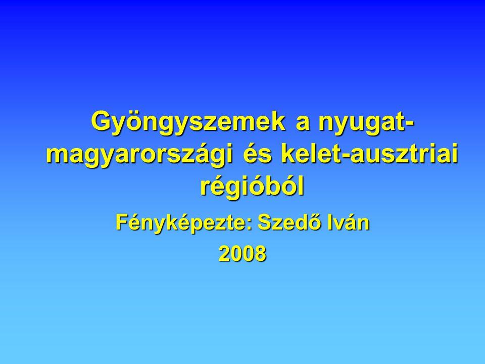 Gyöngyszemek a nyugat- magyarországi és kelet-ausztriai régióból Fényképezte: Szedő Iván 2008