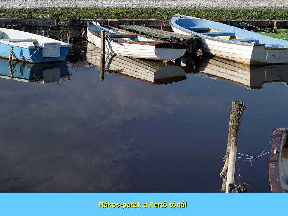 Rákos-patak a Fertő tónál