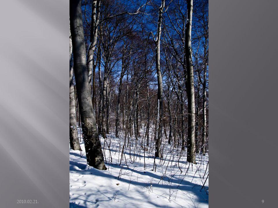 2010.02.21. Kirándulás: Széchenyi hegy - János hegy9