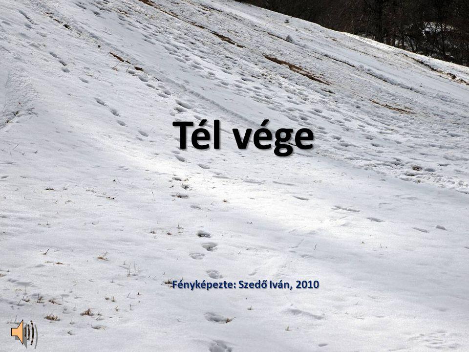 2010.03.14.Tél vége Budai hegyekben11