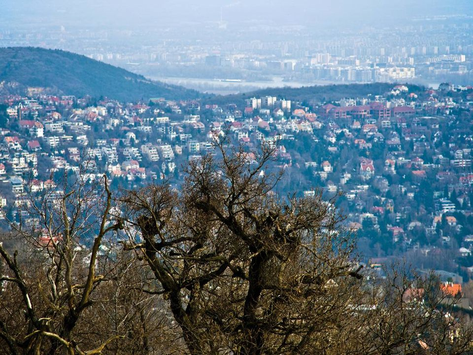 2010.03.14.Tél vége Budai hegyekben10