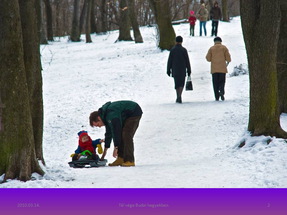 2010.03.14.Tél vége Budai hegyekben12