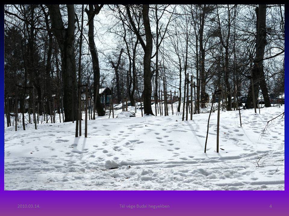 2010.03.14.Tél vége Budai hegyekben3