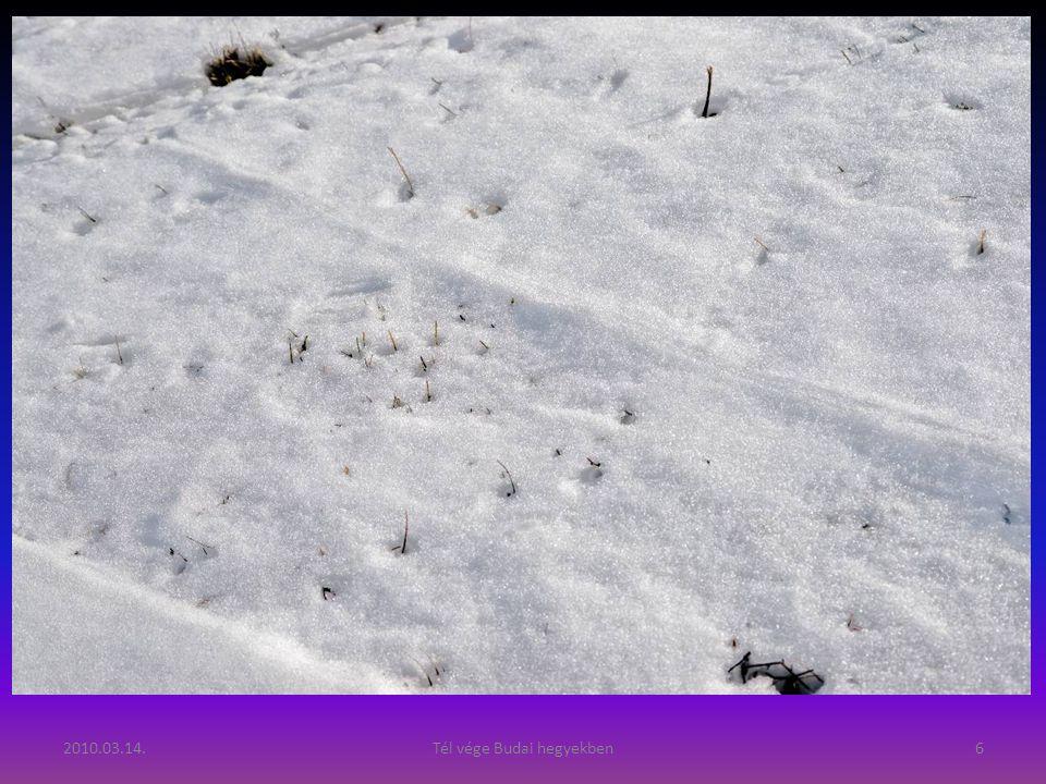 2010.03.14.Tél vége Budai hegyekben6