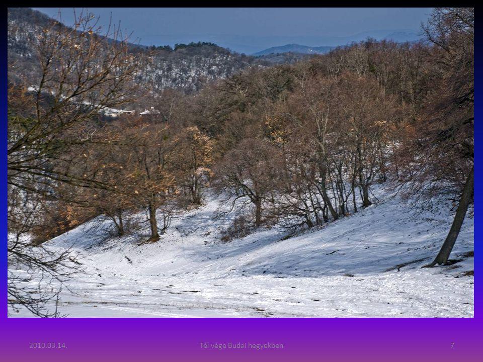 2010.03.14.Tél vége Budai hegyekben7
